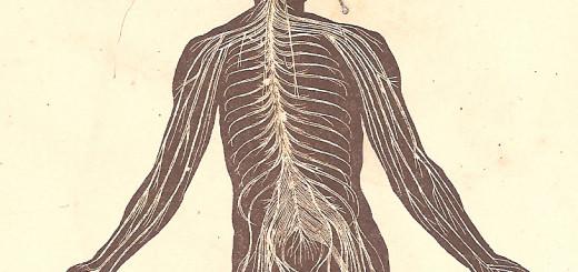 in Balthazar Santos e Mattoso Santos, Atlas de Zoologia, 1907